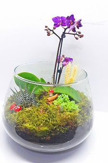 Teraryum Mini Orkide Bahçe