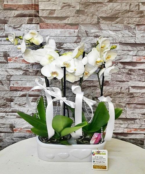 4 Dal Orkide seramik vazoda arajman